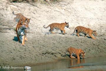 bardiya national park
