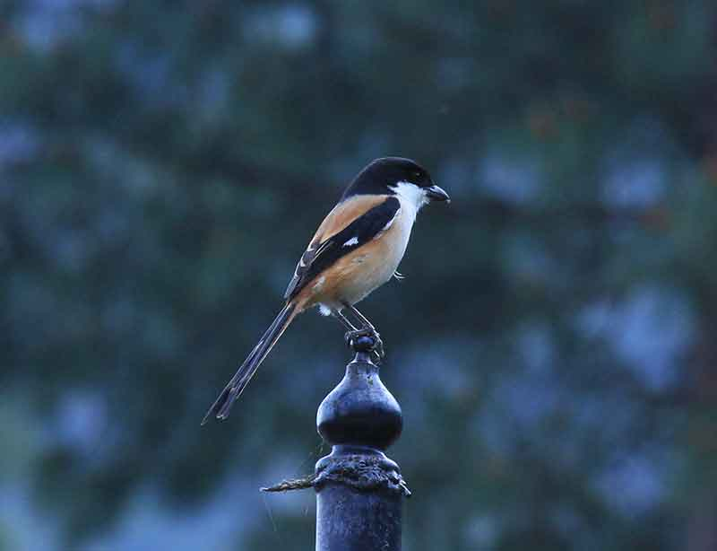 Birdwatching in the Kathmandu Valley