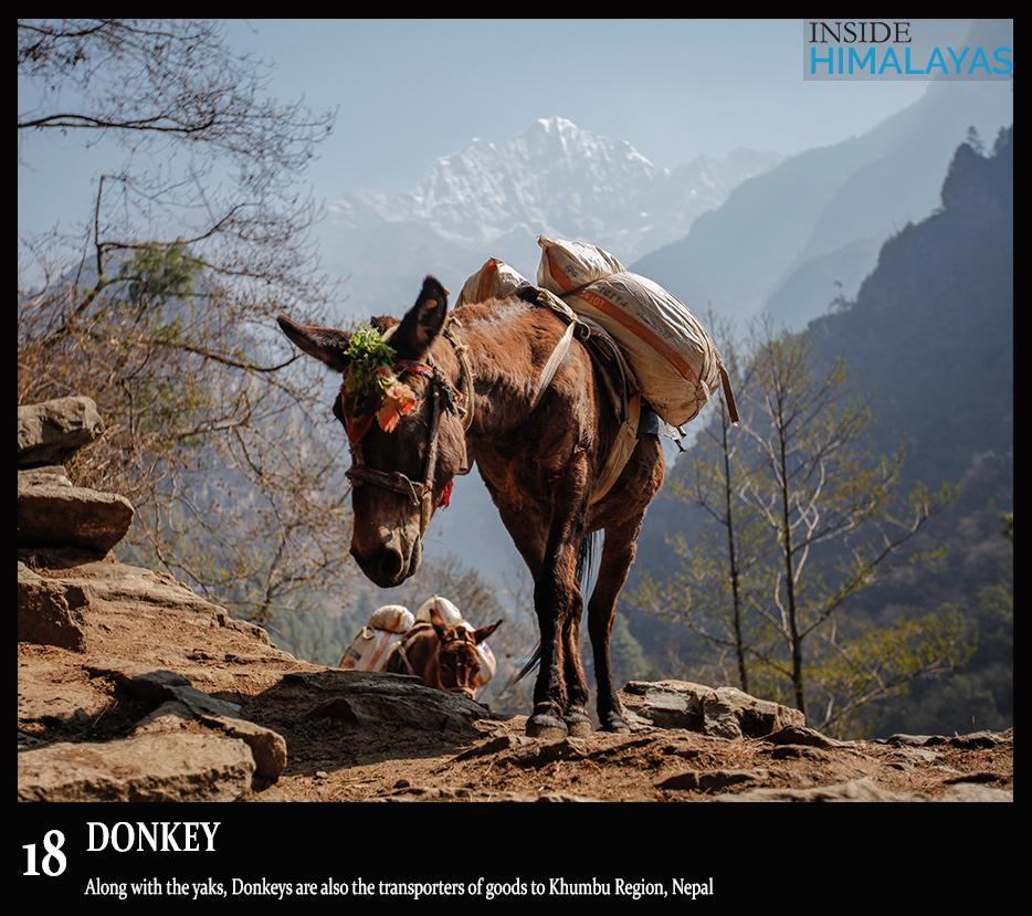 18 Donkey