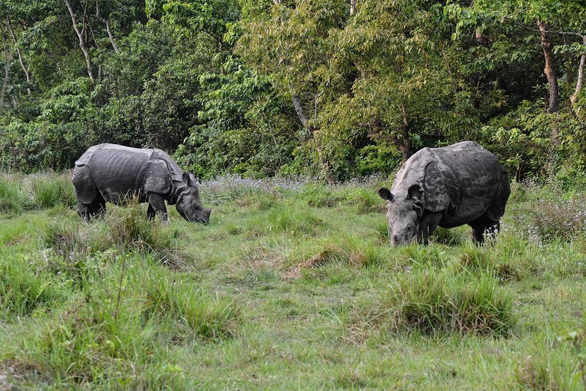 Rhinos at Chitwan National Park.