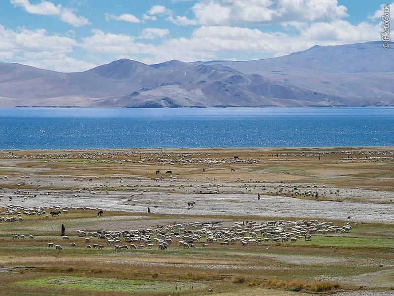 Rough Camping at Tso Moriri, Ladakh