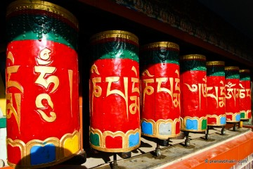 Searching for Tibetan Culture in Dharamsala