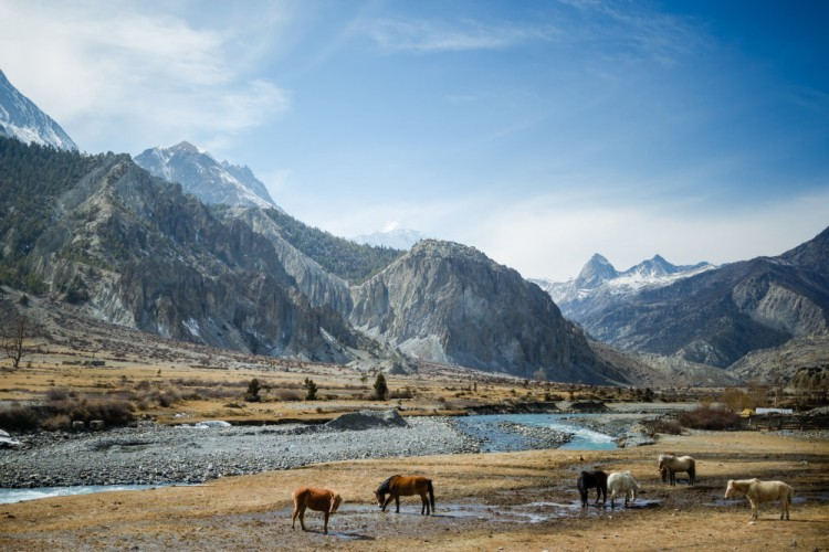 To Trek with a Group or Solo in the Himalayas?