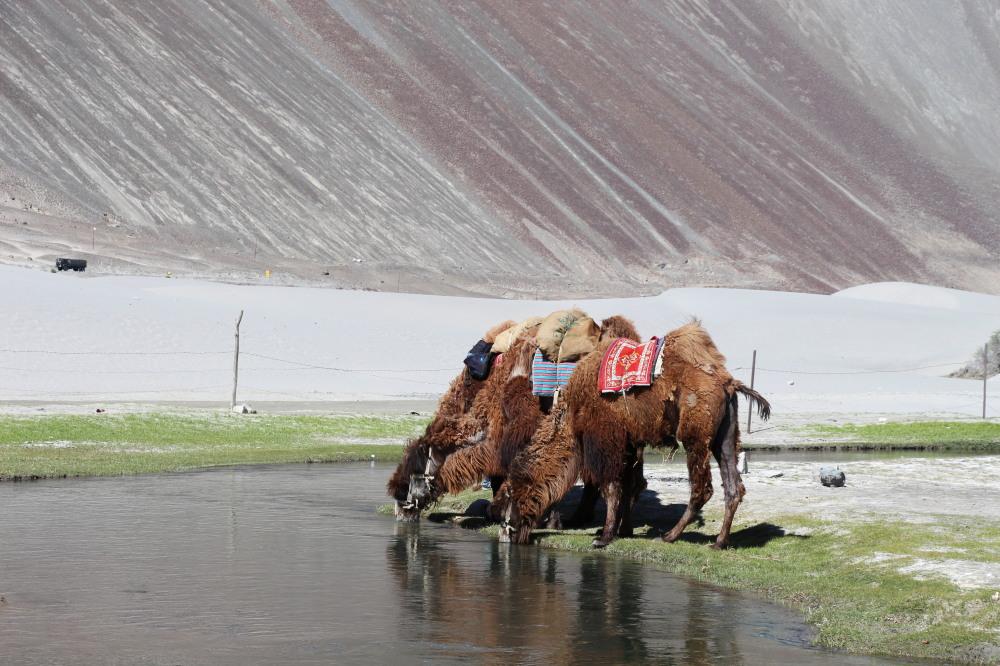 8 Unique Ladakh Experiences You Can't Miss