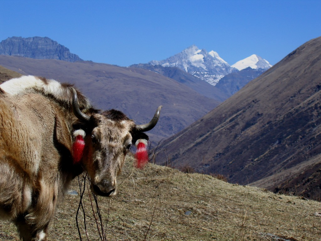 Wildlife in the Himalayas You Might See