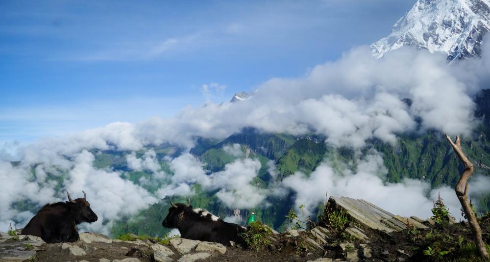 The Mardi Himal Trek During Monsoon