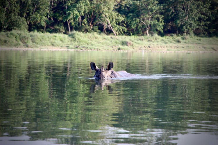 Tips for an Unforgettable Stay in Chitwan