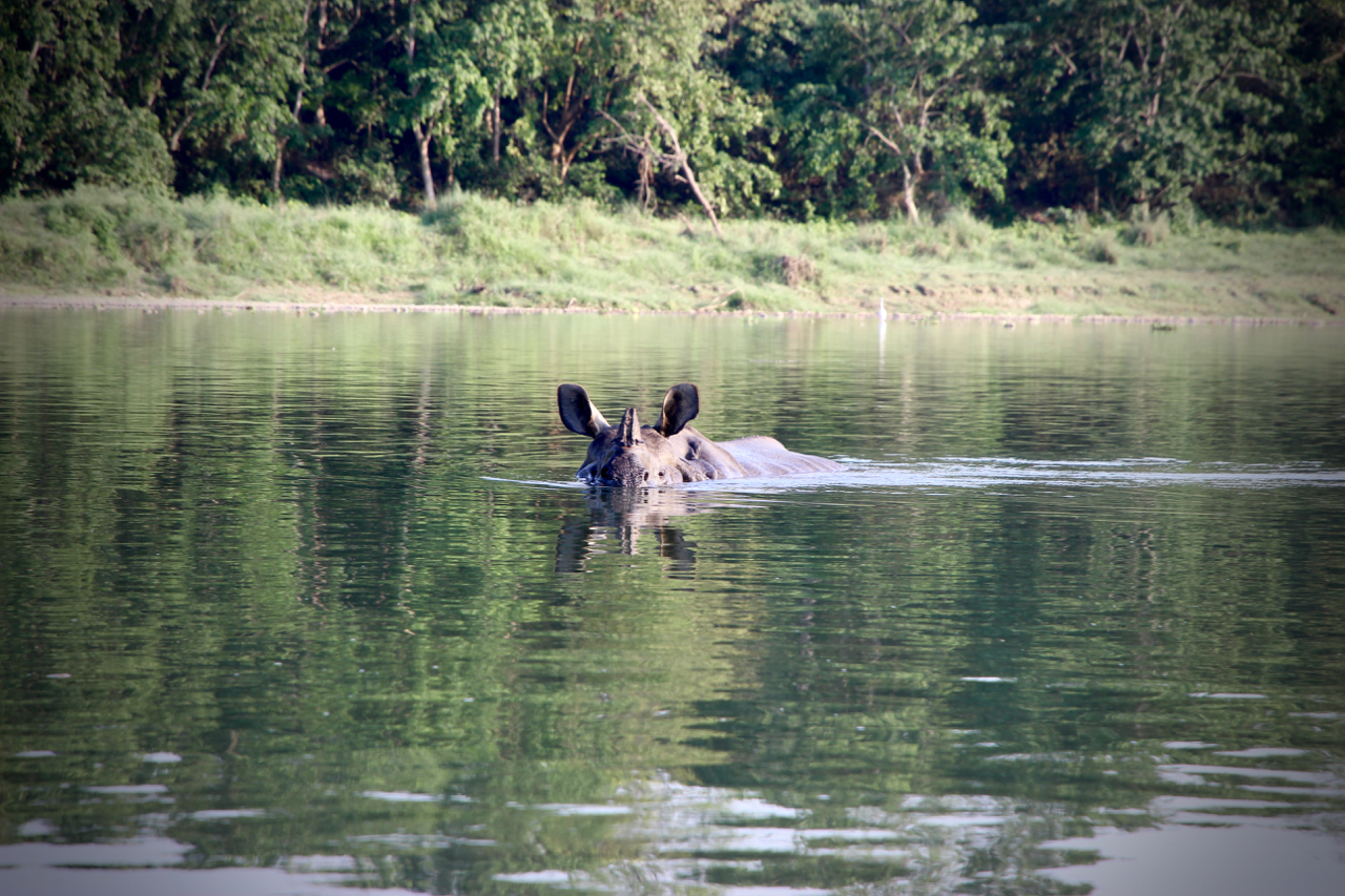 Tips for an Unforgettable Stay in Chitwan - Inside Himalayas