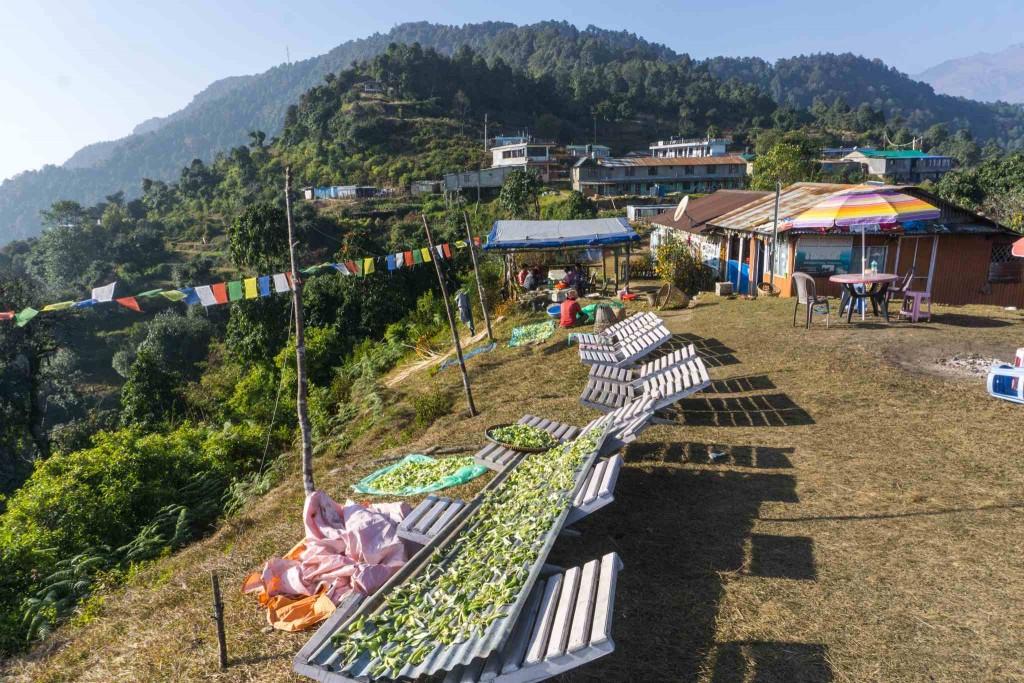 The Australian Camp Hike from Pokhara