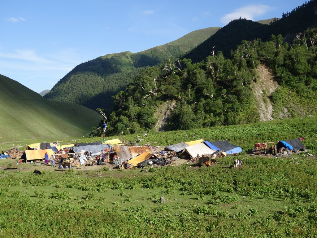 What You Need to Know About Teahouse, Homestay, and Camping Treks in Nepal