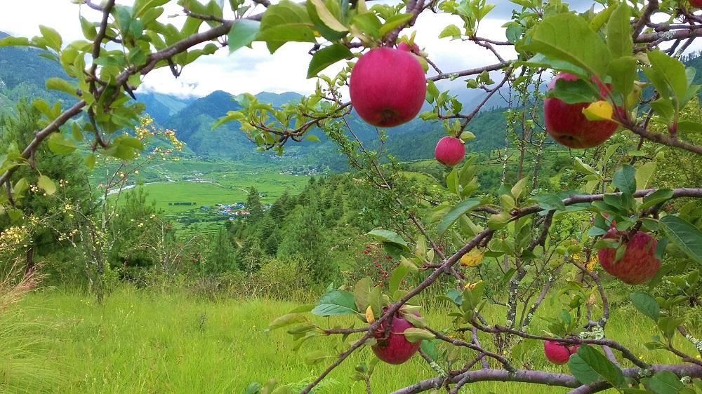Jumla, An Underrated Beauty in Western Nepal