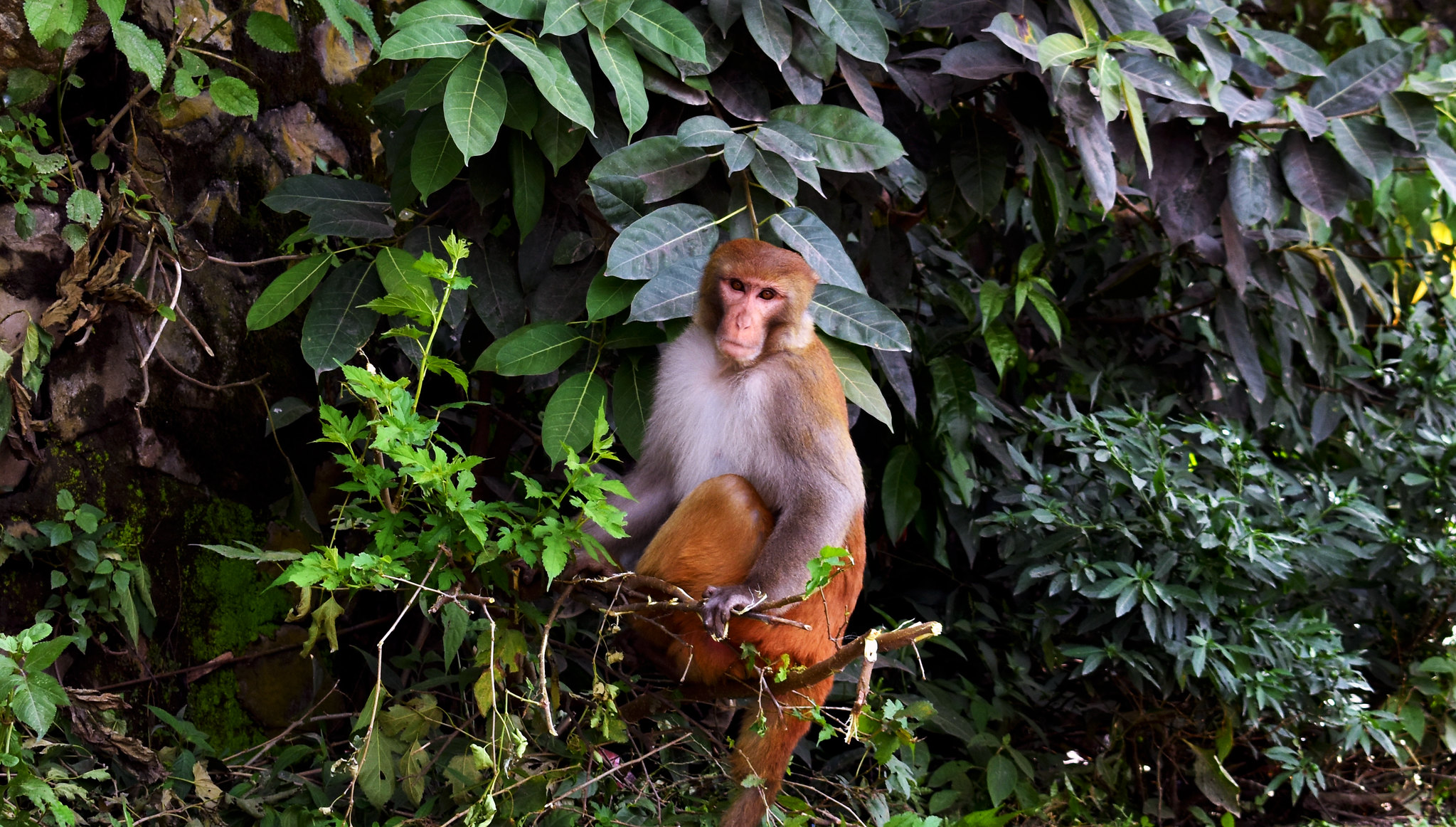 A monkey at Swayambhunath Temple, Kathmandu. Photo: Stig Berge/Flickr