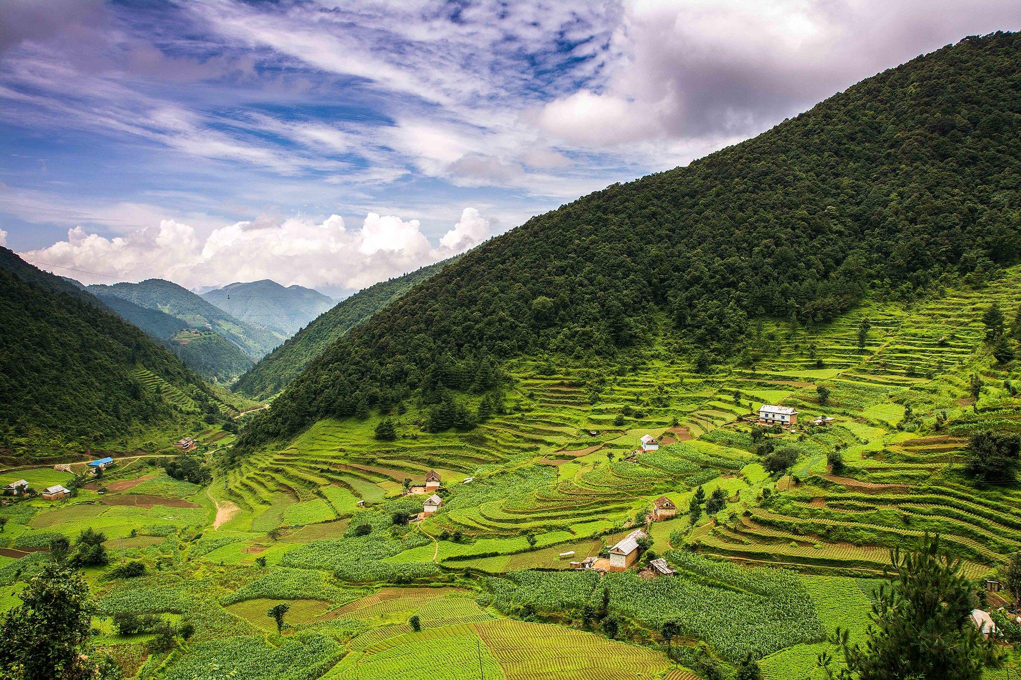 Rice fields in the hills of Nepal. Photo: Sharada Prasad CS
