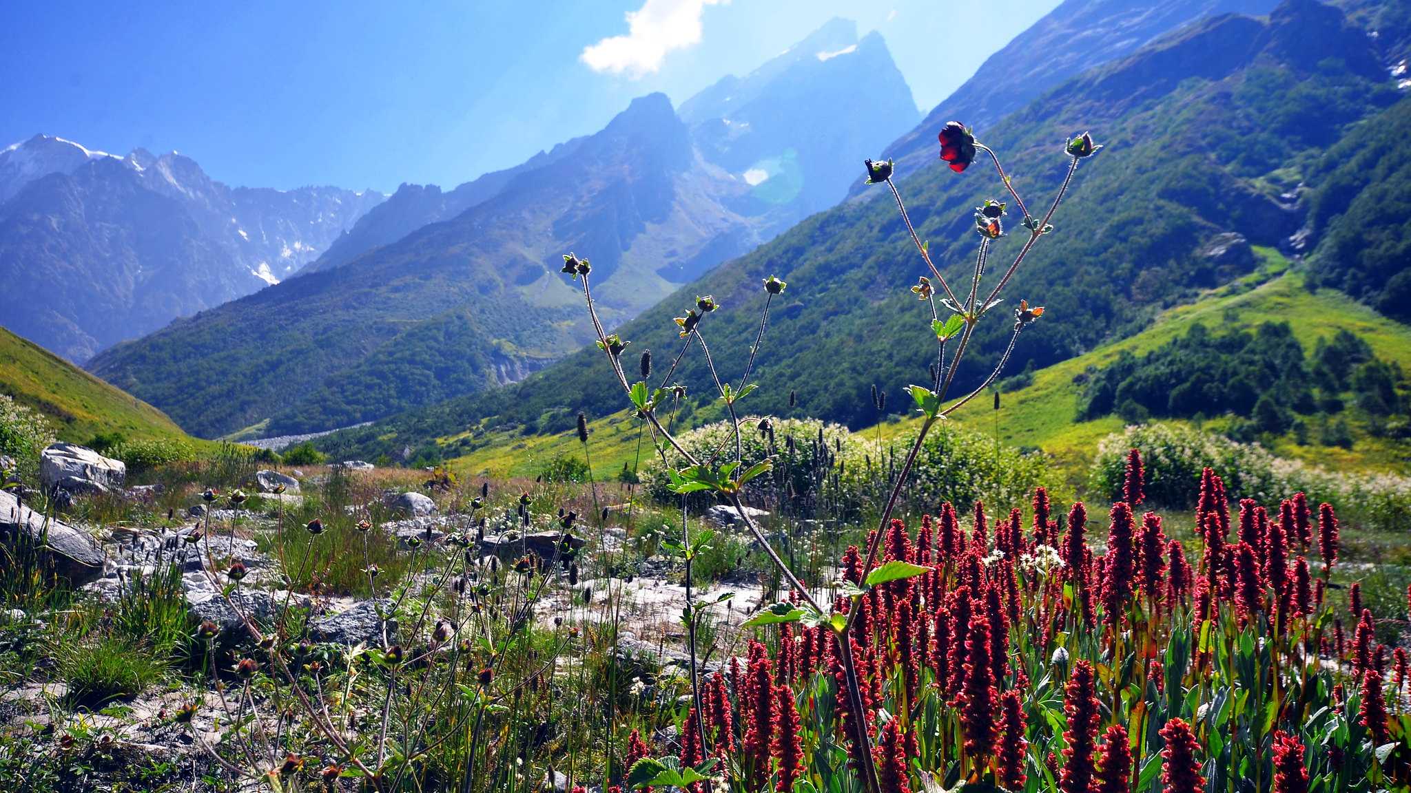 On Top of the World in the Valley of Flowers