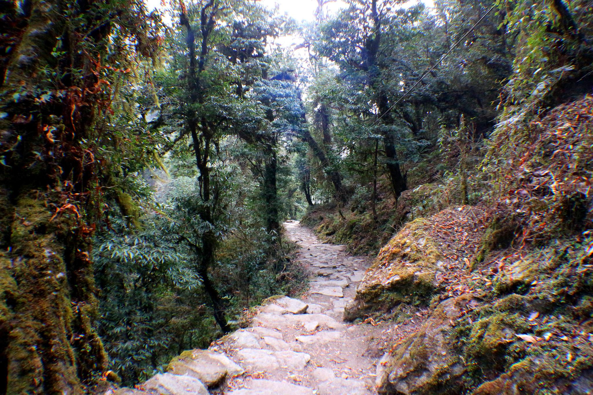 Why the Nayapul to Ghandruk Trek is Ideal for Beginners