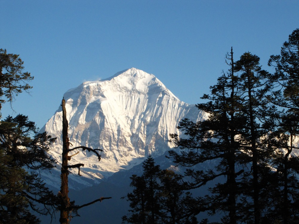 Mount Dhaulagiri. Photo by Vimal Thapa/RMT