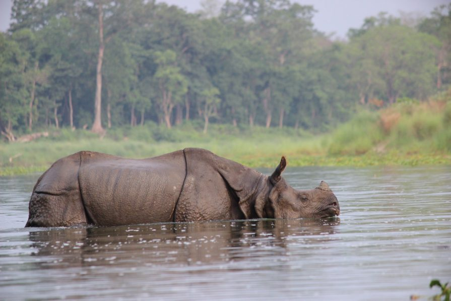 Rhino Conservation in Nepal's Chitwan National Park